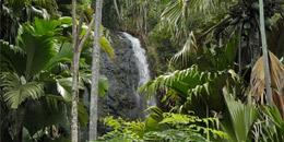 Vallee De Mai National Park